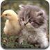 小鸡和猫咪拼图