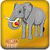 喂养马戏团大象