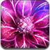 梦幻花朵找字母
