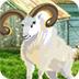 救援峡谷山羊